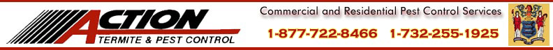 New Jersey Termite and Pest Control