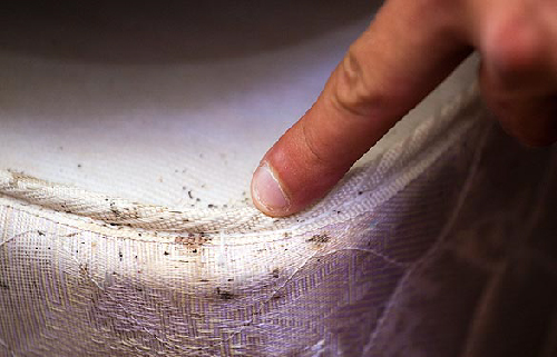 Bed Bugs Detection